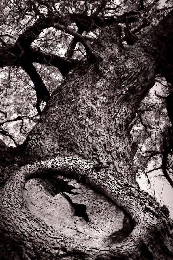 Tree Photograph - Lightning Tree  by Trish Mistric