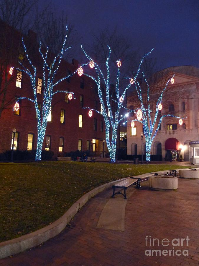 lights and orbs on trees in tommy s park in portland maine