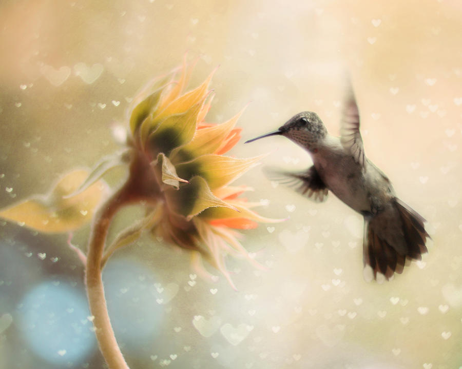 Hummingbird Photograph - Like A Moth To A Flame by Amy Tyler