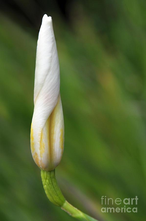 Flower Photograph - Like A Rocket by Dan Holm