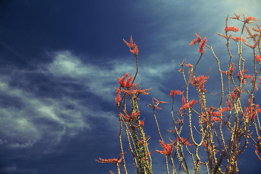 Joshua Tree National Park Photograph - Like Flying Amongst The Clouds by Laurie Search