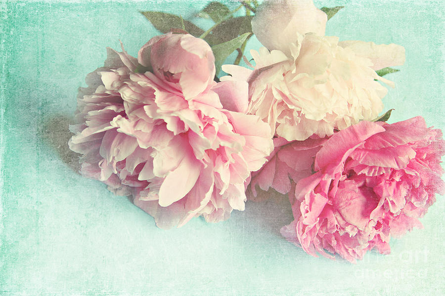Peony Photograph - Like Yesterday by Sylvia Cook