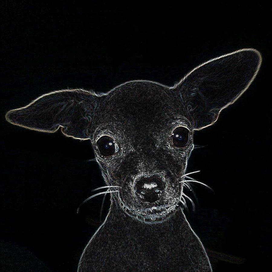 Black & White Digital Art - Lil Miss Sugar Bear by Gus Joseph