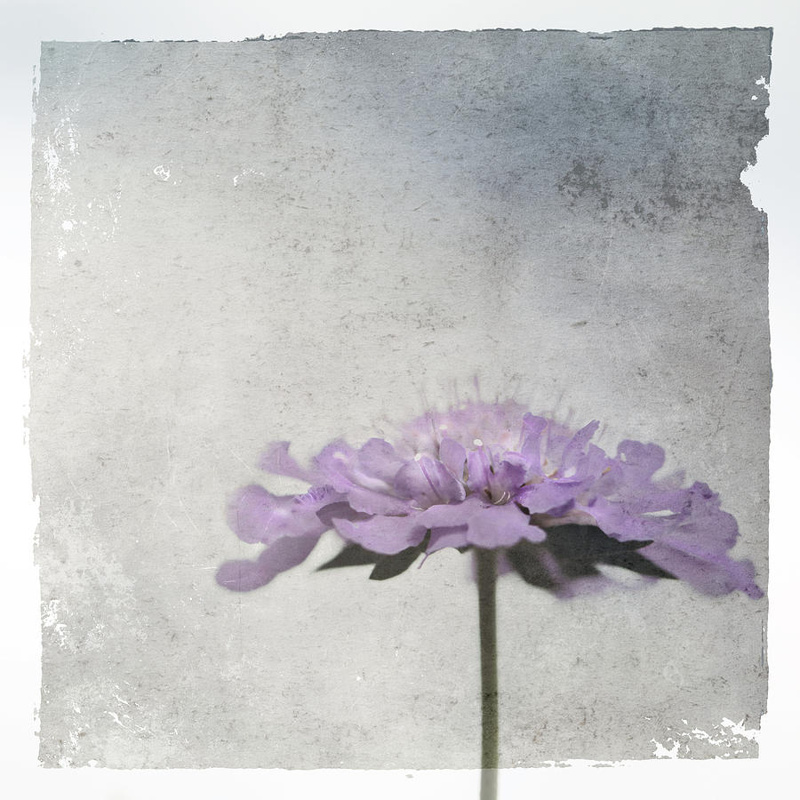 Floral Photograph - Lilac by Annie Snel