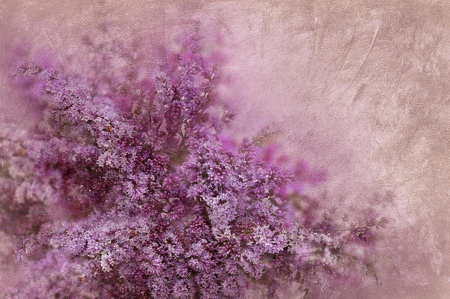 Abstract Digital Art - Lilac Splash by Svetlana Sewell