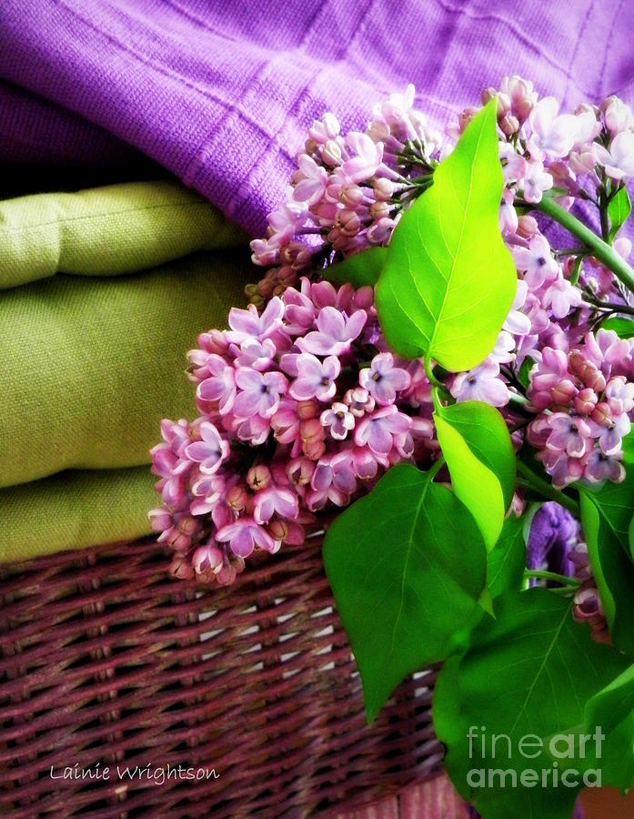 Lilac Photograph - Lilac Still Life by Lainie Wrightson