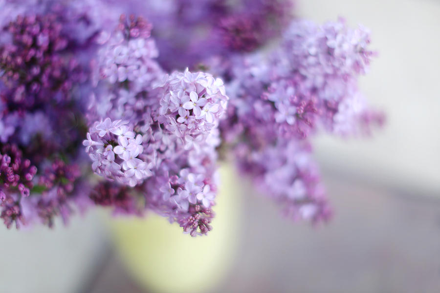 Lilacs Photograph - Lilacs In A Vase by Rebecca Cozart