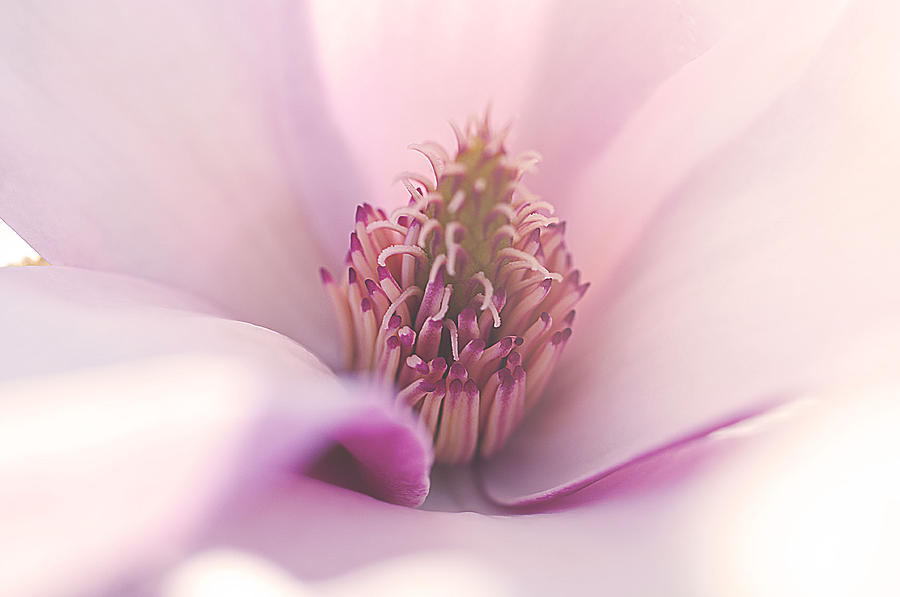 Macro Photograph - Liliana by Faith Simbeck