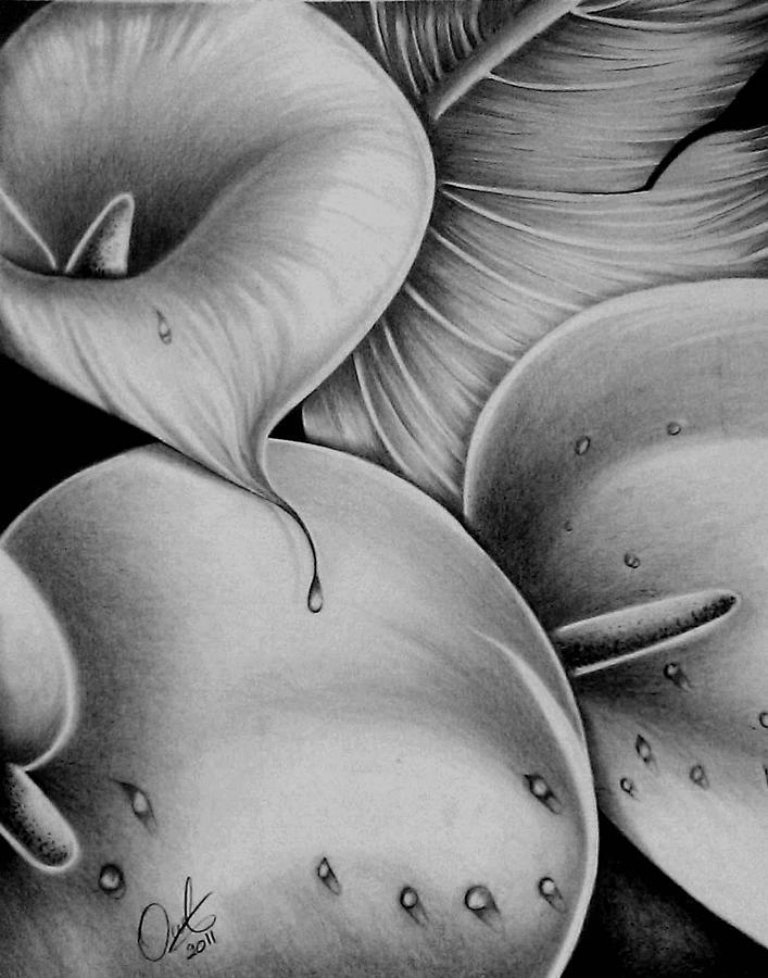Lilies 3 by Owen Lafon