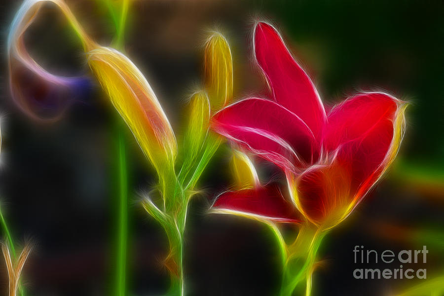 Flower Photograph - Lilies-6340-fractal by Gary Gingrich Galleries