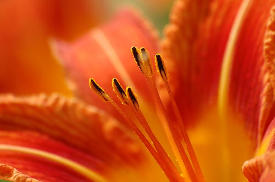 Day Photograph - Lilies Heart by Edward Loesch