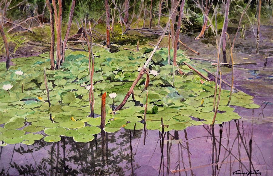 Pond Painting - Lilies In August by Thomas Stratton