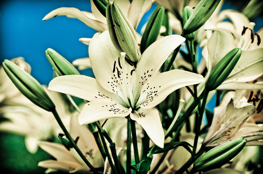 Lily Pyrography - Lilies In White by Shirley Tinkham