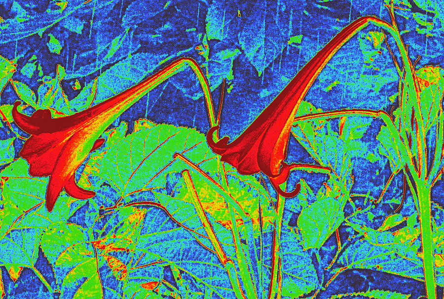 Flowers Digital Art - Lilies Turned Red by Randall Weidner