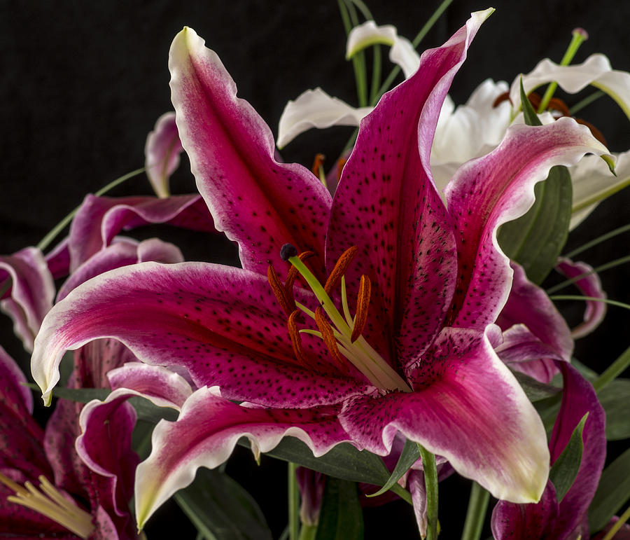 Lilium Photograph - Lilium by Mike Herdering