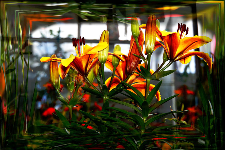 Flower Photograph - Lilium by Nigel Watts
