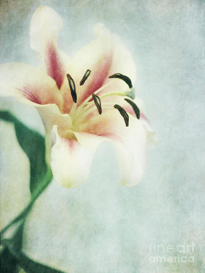 Lily Photograph - Lilium by Priska Wettstein