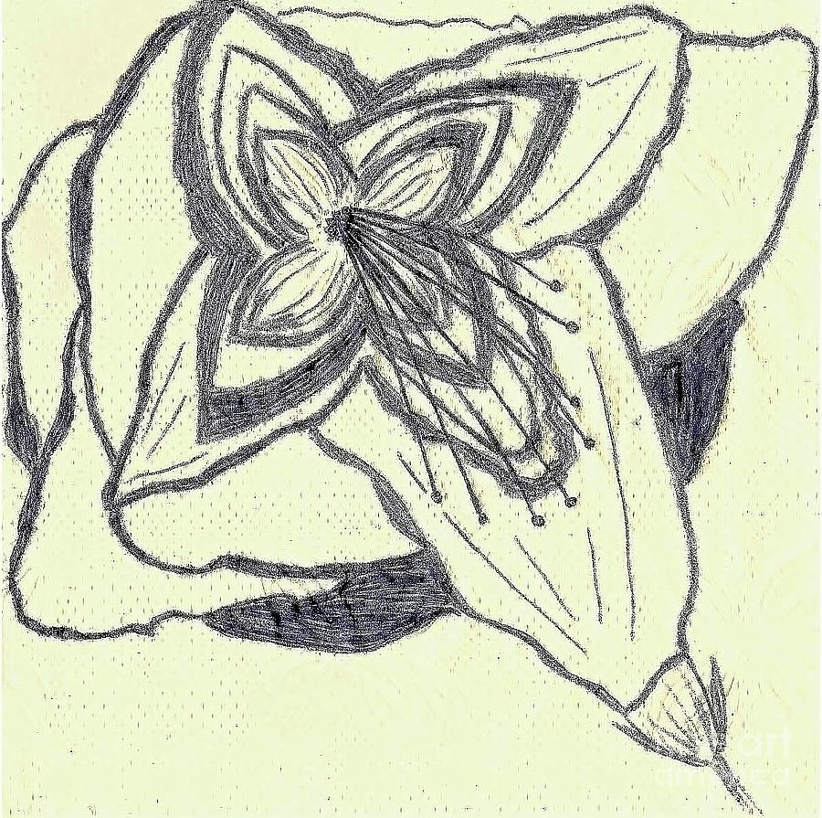 Southern Drawing - Lilly Artistic Doodling Drawing by Joseph Baril