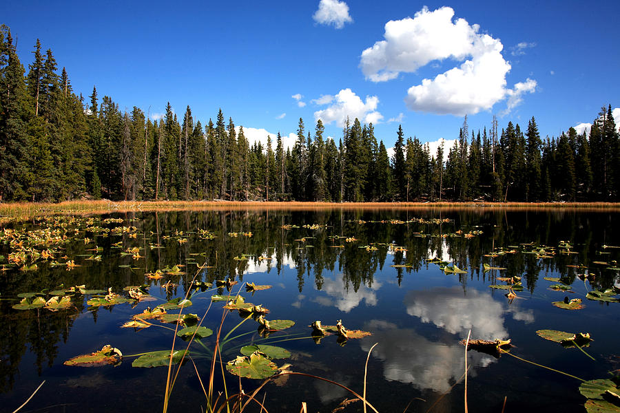 Scenic Photograph - Lilly Pond by Darryl Wilkinson