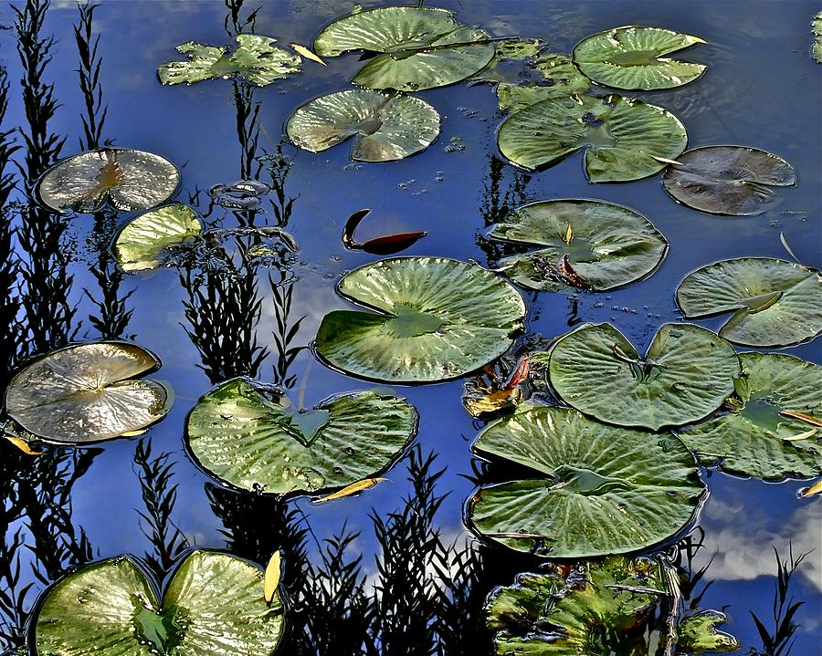 Lilly Photograph - Lilly Pond by Frozen in Time Fine Art Photography
