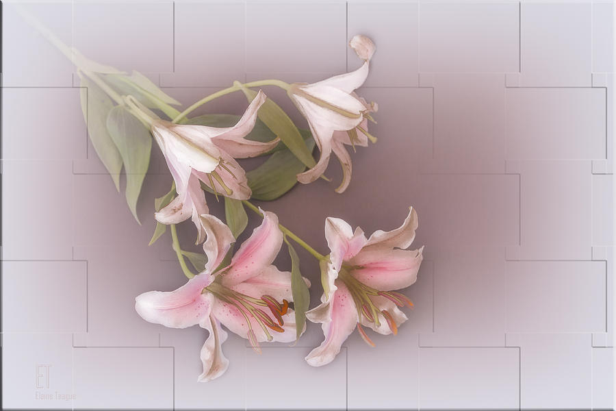 Flowers Photograph - Lily by Elaine Teague
