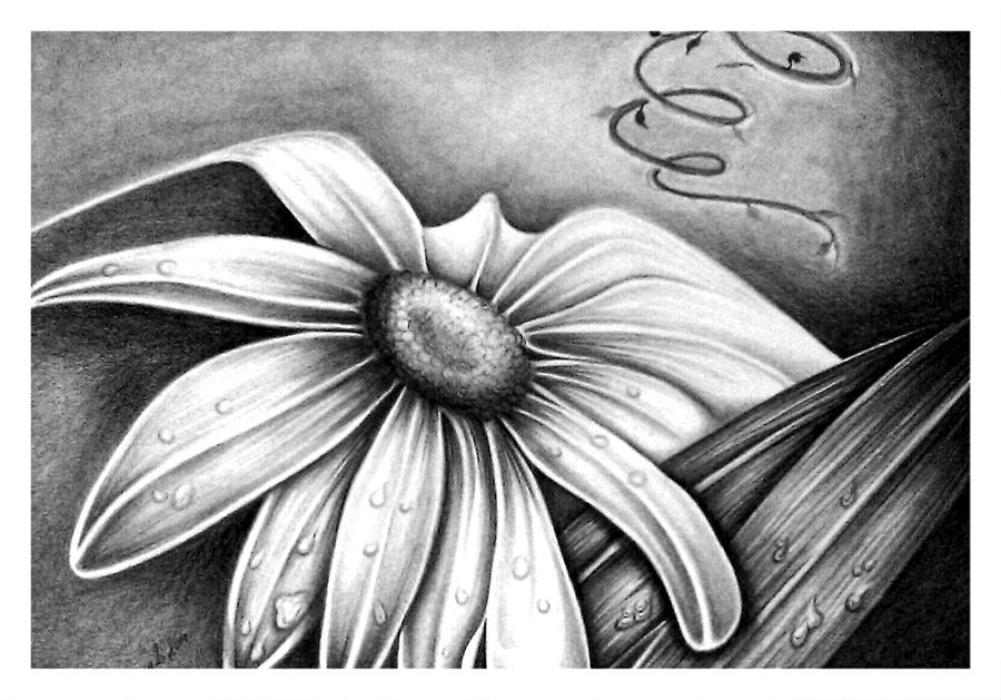 Pencil Drawings Drawing - Lily Flower by Owen Lafon