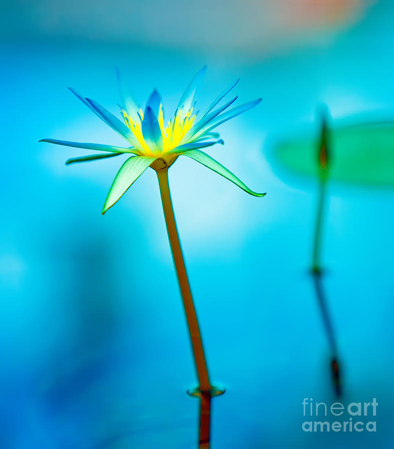 Lily in Blue Photograph by Bill  Robinson