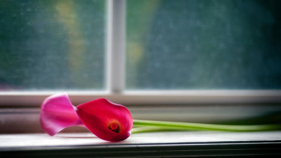 Lily Photograph - Lily In Window by Tammy Smith