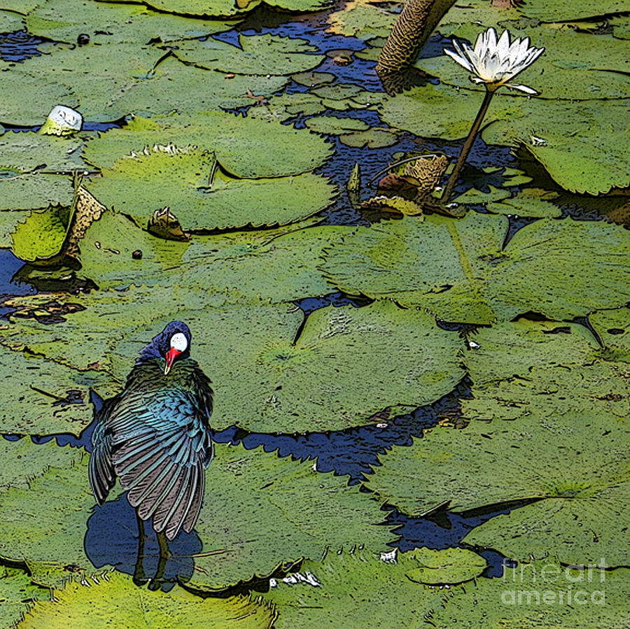Lily Pad With Bird2 Digital Art by Jacquelinemari