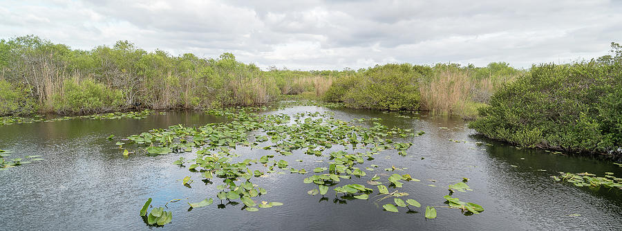 Horizontal Photograph - Lily Pads Floating On Water, Anhinga by Panoramic Images