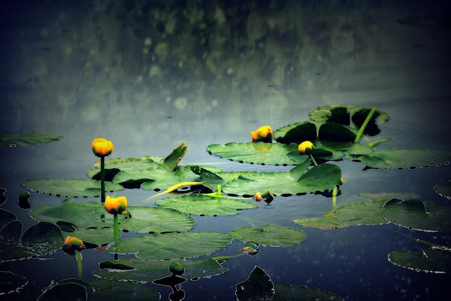 Lily Pads Digital Art - Lily Pads in the Rain at Vernonia Lake by Dawna Morton