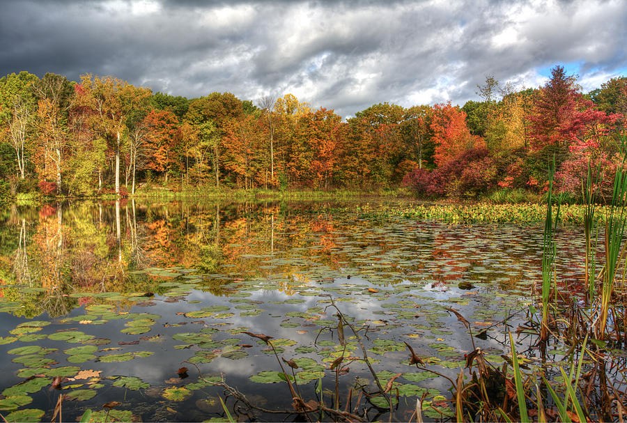 Lily Pads on Foster Pond by At Lands End Photography