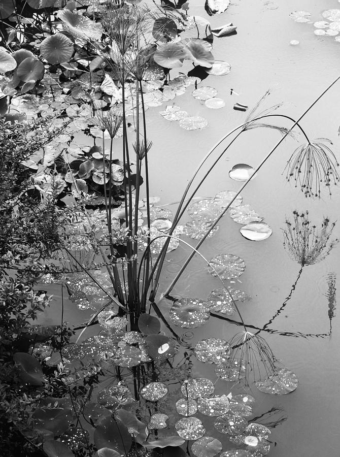 Lily Pads Photograph - Lily Pads by Pat McGrath Avery