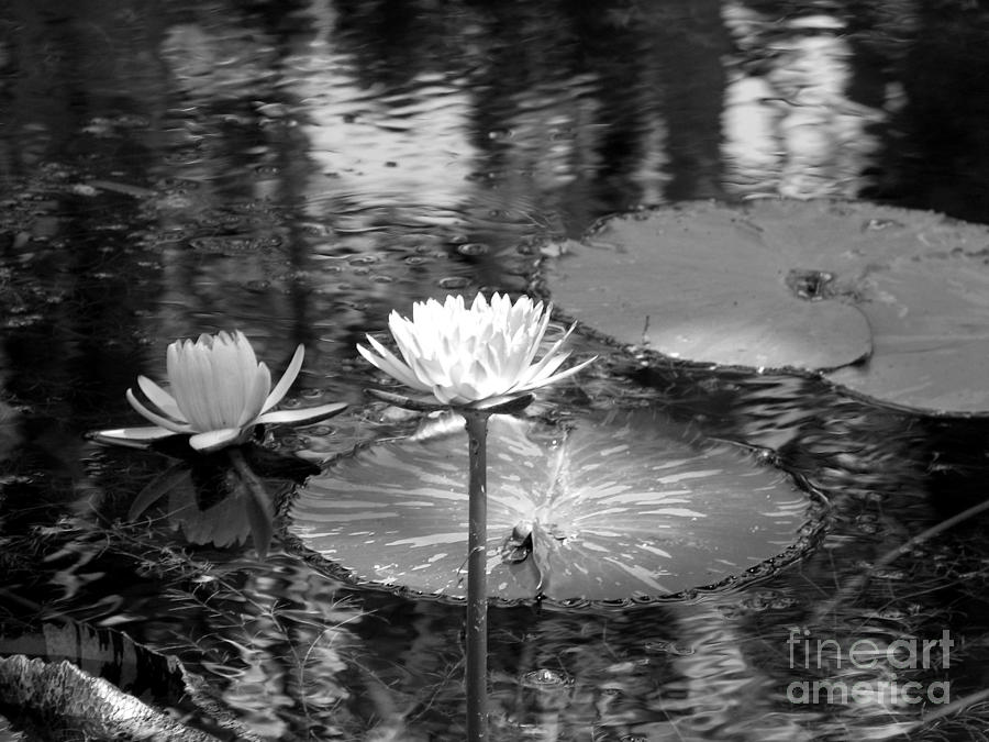 Still Life Photograph - Lily Pond 2 by Anita Lewis