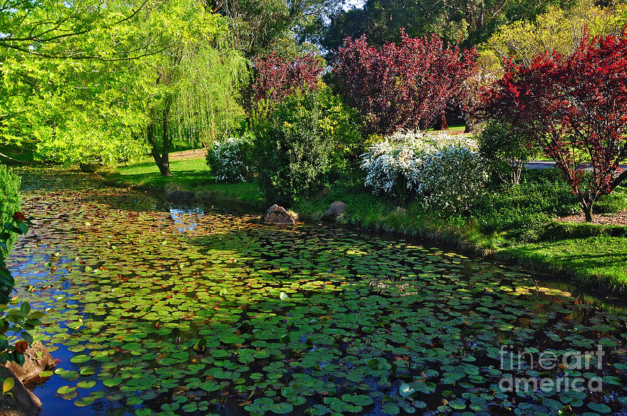 Colorful Gardens Photograph - Lily Pond And Colorful Gardens by Kaye Menner