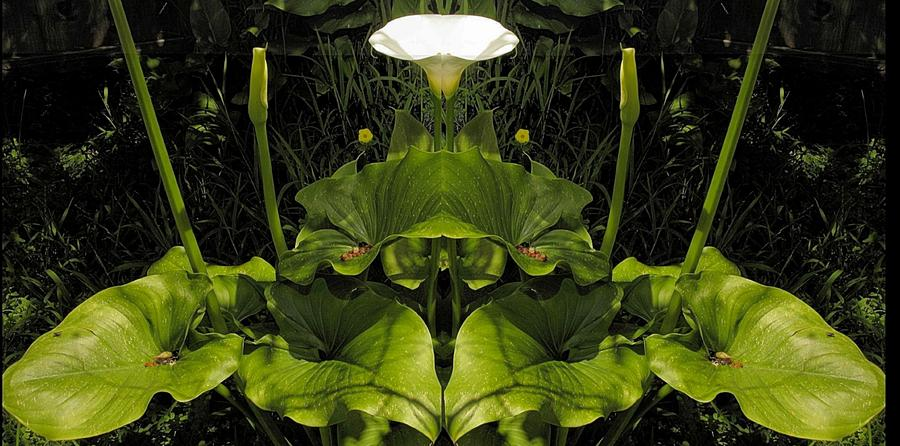 Symmetry Photograph - Lily Symmetry  by Elery Oxford