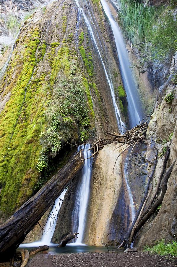 Big Sur Photograph - Limekiln State Park by Jenna Szerlag