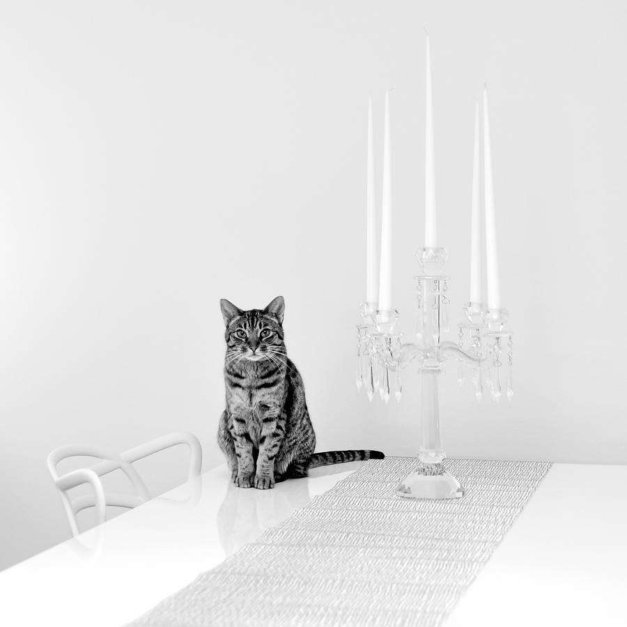 Cat Photograph - Linda by Ari Salmela