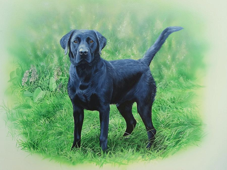 Labrador Painting - Linden by Julian Wheat