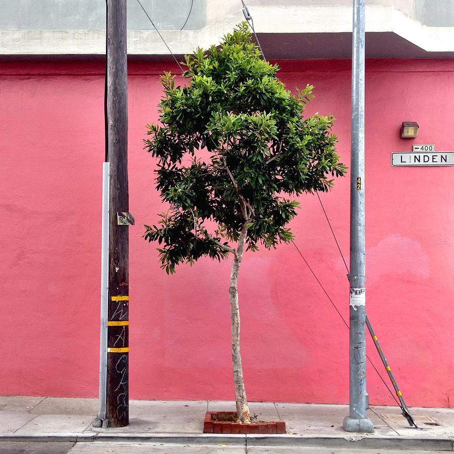 Pink Wall Photograph - Linden Street by Julie Gebhardt