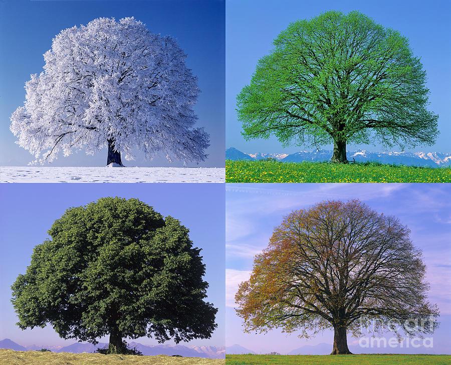 дерево зимой летом на одной картинке стандартного