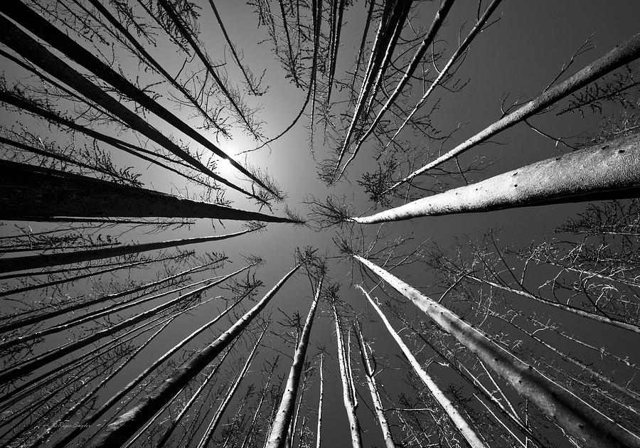 Beautiful Photograph - Line Creek Burn Area 8 Bw by Roger Snyder