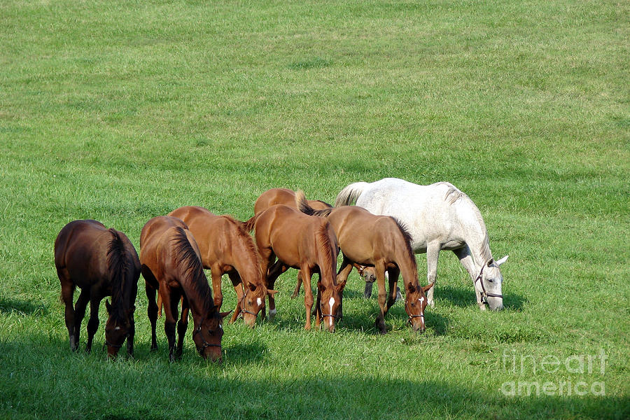 Horse Photograph - Line Feeding by Olivier Le Queinec