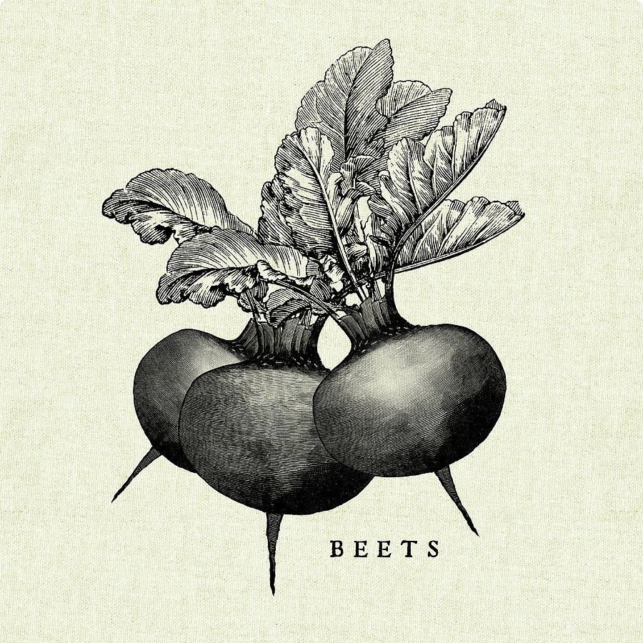 Beets Painting - Linen Vegetable Bw Sketch Beets by Studio Mousseau
