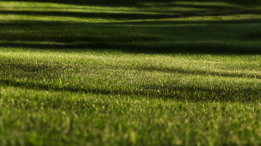 Grass Photograph - Lines by Melissa Petrey