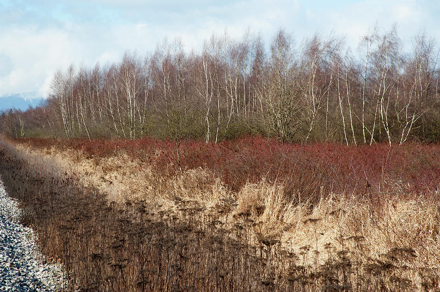 Lines Of Bare Trees And Brown Grass Photograph by Stuart Mccall