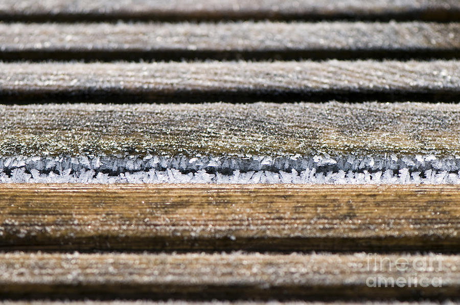 Garden Photograph - Lines Of Ice by Anne Gilbert