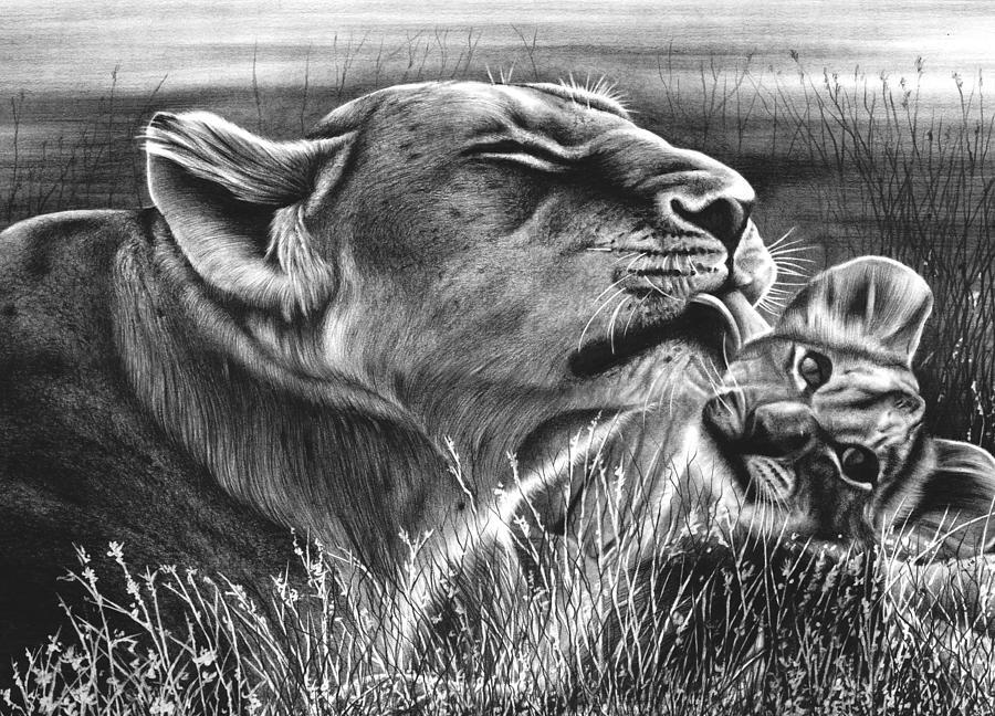 Lion And Cub Drawing