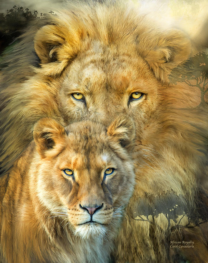 Lion And Lioness- African Royalty Mixed Media by Carol Cavalaris