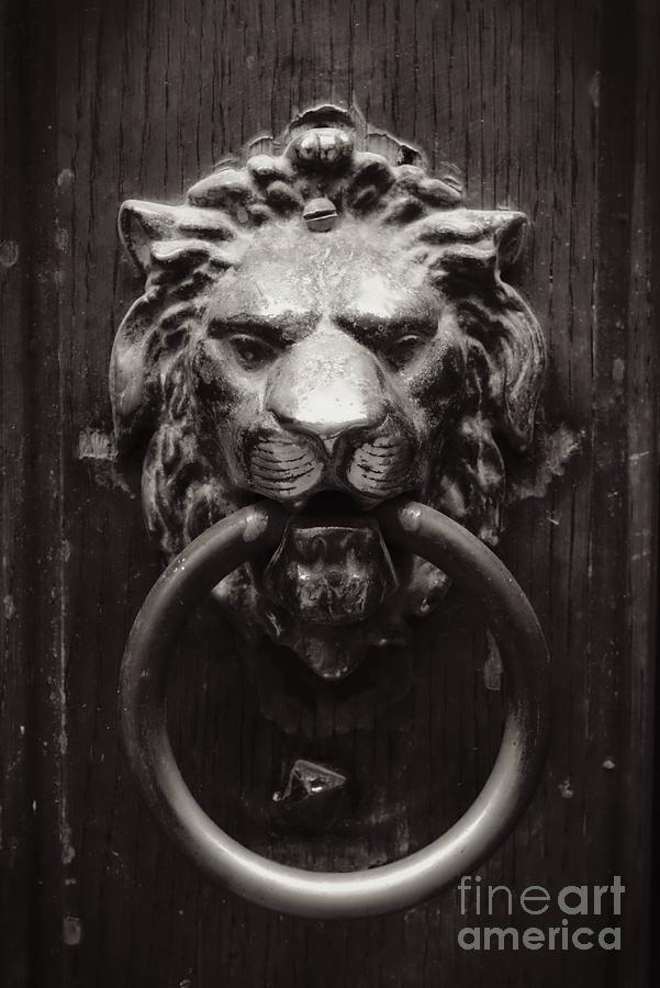 Lion Photograph - Lion Door Knocker by Carol Groenen